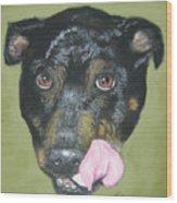 English Staffordshire Bull Terrier  Wood Print
