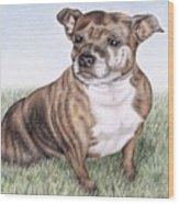 English Staffordshire Terrier Wood Print