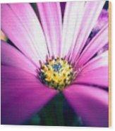 Enhanced Daisy Wood Print