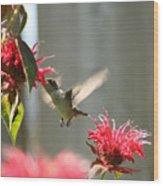 Enjoying The Bee Balm  Wood Print