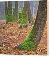 Enjoying The Forest Of Oak Run Wood Print