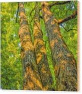Enlightened Trees Wood Print