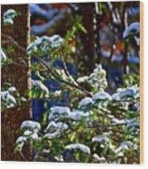 Enlightened Winter Wood Print