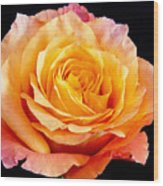 Enticing Beauty The Orange  Rose Wood Print