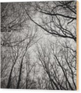 Entwined In The Sky Wood Print