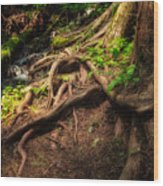 Entwined Roots Wood Print