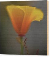 Ephemeral Poppy Wood Print