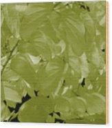 Epiphnay 1 Wood Print