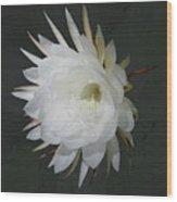 Epiphyte Blossom - Epiphyllum Oxypetalum Wood Print