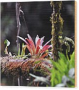 Epiphytic Plants Wood Print