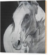 Equestrian Beauty Wood Print
