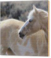 Equine Golden Glow Wood Print