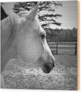 Equine Profile Wood Print