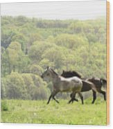 Equines For Freedom Wood Print