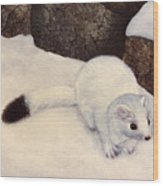 Ermine In Winter Wood Print