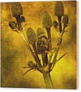 Eryngium Gold Wood Print