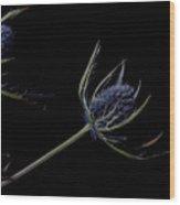 Eryngium Wood Print