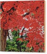 Essence Of Japanese Maple Tree Wood Print