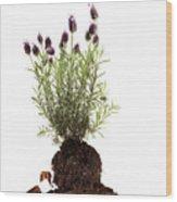 Essential Oil Of Spanish Lavender Wood Print