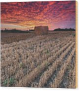 Essex Hay At Sunrise Wood Print