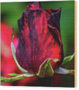 Eternal Love Rose Wood Print