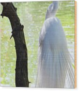 Ethereal Snowy Egret Wood Print