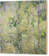 Eucalyptus 013 Wood Print