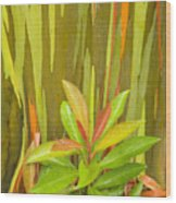 Eucalyptus And Leaves Wood Print