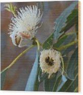 Eucalyptus Bloom Wood Print