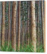 Eucalyptus Forest Wood Print