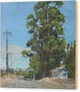 Eucalyptus Tree Near Schellville, Ca Wood Print