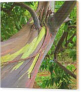 Eucalyptus Tree Wood Print