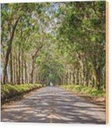 Eucalyptus Tree Tunnel - Kauai Hawaii Wood Print