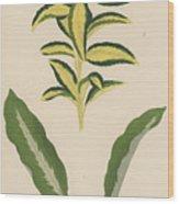 Euonymus Japonica Aurea Variegata, Maranta Micans Wood Print
