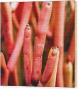 Euphorbia Wood Print