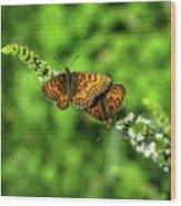 Euphydryas Aurinia  Wood Print