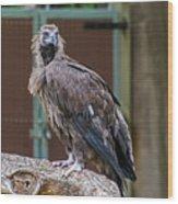 Eurasian Black Vulture 1 Wood Print