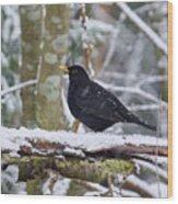 Eurasian Blackbird In The Snow Wood Print