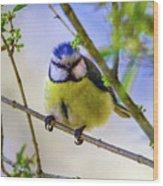 Eurasian Blue Tit, Cyanistes Caeruleus Wood Print