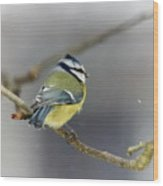 Eurasian Blue Tit With Snow Wood Print