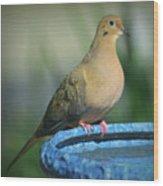 Mourning Dove On Birdbath Wood Print