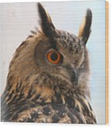 Eurasian Eagle-owl Wood Print