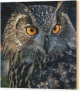 Eurasian Eagle Owl Wood Print