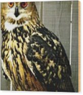 Eurasian Eagle-owl With Oil Painting Effect Wood Print