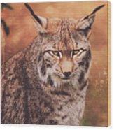 Eurasian Lynx Wood Print