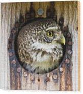 Eurasian Pygmy Owl In Profile Wood Print