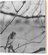 European Goldfinch 1 Wood Print