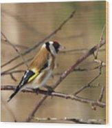 European Goldfinch 5 Wood Print