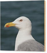 European Herring Gull Portrait Wood Print