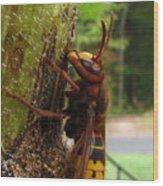 European Hornet Wood Print